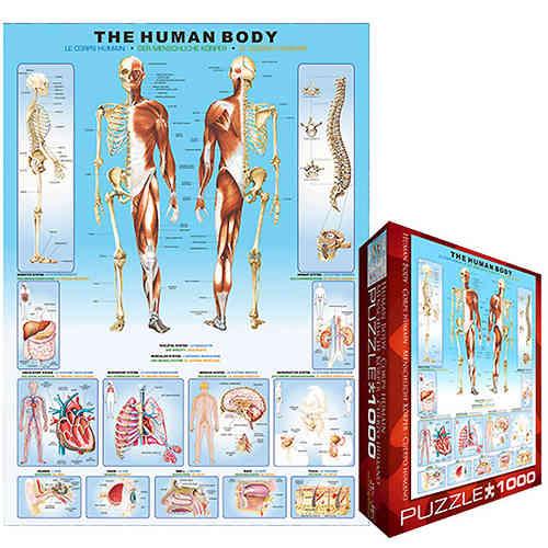 Puzzle Der menschliche Körper - Puzzle-Net